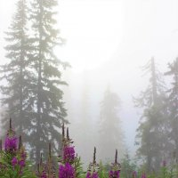 В утреннем тумане :: Сергей Чиняев