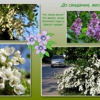 Когда цветут города! :: Татьяна Смоляниченко