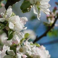 Майские цветы :: Владимир Гилясев