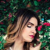 Мини розы :: Ирина Ширма