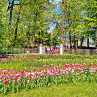 Фестиваль тюльпанов в ЦПКиО :: Олег Попков