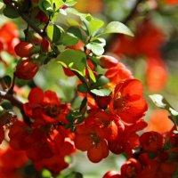 Весенний свет. :: Лариса Валентинова