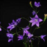 лесные цветы :: Олеся Зырянова