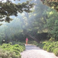одинокая прогулка в тумане :: Елена