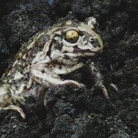 жаба :: Юлия Денискина