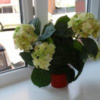 цветочек :: Юлия Мошкова