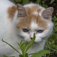 Кошка и муравей. :: Анатолий. Chesnavik.