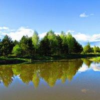 Прудик в лесу :: Vladimir Perminoff