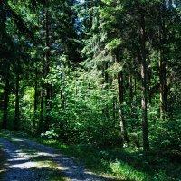 Пение птиц в тишине леса  ... :: Владимир Икомацких
