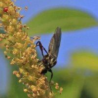 собиратель нектара :: оксана