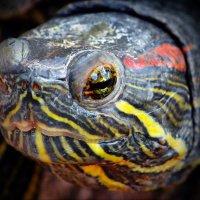 vit5 глаза рептилии :: Vitaly Faiv