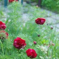 В саду 022 :: Игорь Шубовичь