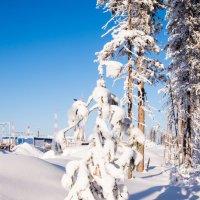 В лесу родилась ёлочка... :: Ruslan