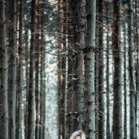 В сосновом лесу :: Илья Страчков
