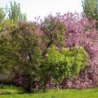 Цвета весны... :: Сергей Касимов