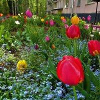 Наш весенний двор... :: Sergey Gordoff