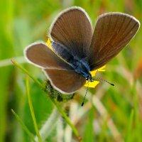 живой коричневый цветок :: Александр Прокудин
