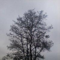Осеннее древо. :: Daniel Surov