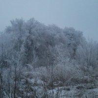 Белые деревья. :: Daniel Surov