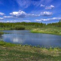 Лесное озеро :: Виктор Куприянов