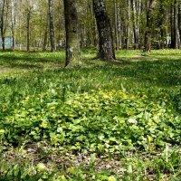 Цветущая полянка... :: Жанна Литуева
