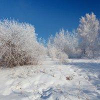 Уголок прошедшей зимы :: Анатолий Иргл
