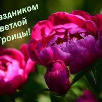Троица :: Татьяна Евдокимова