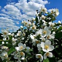 Цветы :: Владимир Бровко