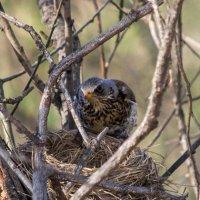 Моё ли это гнездо? :: Татьяна Степанова