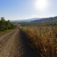 Утро в поле :: Alex Molodetsky