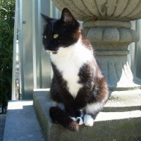 Эта кошка частенько сидит на этом месте и любит всем позировать :: татьяна