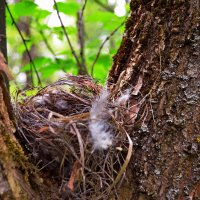 Покинутое гнездо.. :: Vladimir Semenchukov
