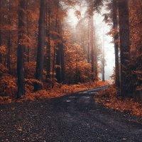 В лесу :: Ivanka Ivanka