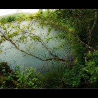 В лесу... :: алексей афанасьев