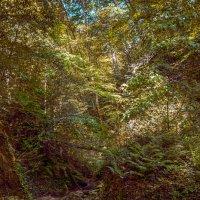 Лесной ручей :: Андрей Володин