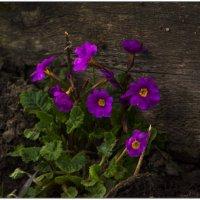Летние цветы. :: Марина Никулина