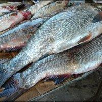 Донская рыбка :: Надежда