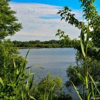 Большая вода весны нынешнего года :: Александр Облещенко