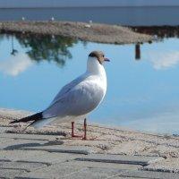 Чайка на острове :: Янита Рудакова