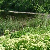 У озера... :: марина ковшова