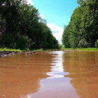 Просто летний дождь прошёл.. :: Андрей Заломленков