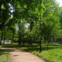 Дорожка в парке. (Санкт-Петербург). :: Светлана Калмыкова