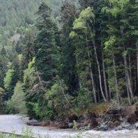 река Зеленчук весной, Архыз :: Мария Климова