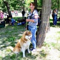 На выставке собак :: Владимир Болдырев