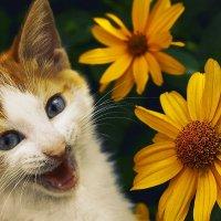 Солнечное счастье :: Валентина К