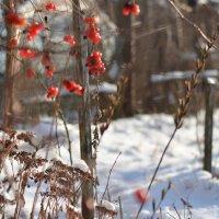 Зимние мотивы :: Алёна Епичурина
