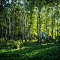 Просто в лесу... :: *MIRA* **