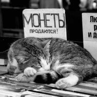 монеты продаются, а котики - нет! :: Игорь Попов