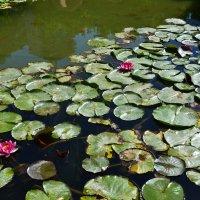 Есть в южном парке черный пруд... :: Ольга