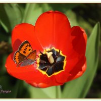 Flora and fauna. :: Anatol Livtsov